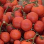 Güvercinlik Tomaten
